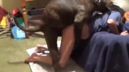 Dog pornos упитанная псина оживленно пердолит в писечку брюнетку видео зоо личное
