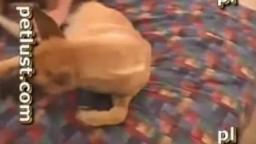 Блудливый долбень дрючит сучку пред камерой классический перепихон зоо