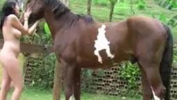 Сексуальная молодая шлюшка дрочит пред лошадью изящное zoo online